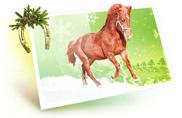 Акция - получи настоящего, живого мини-коня
